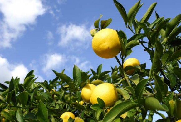 "Peter Paul and Mary: ""Lemon Tree"""