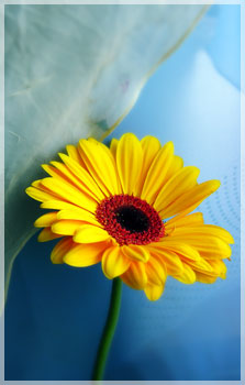 Ditelo con i fiori