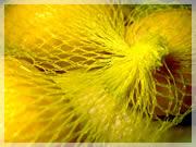 I limoni nella retina