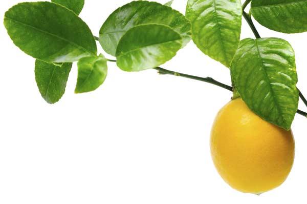 "Fool's Garden: ""Lemon Tree"""