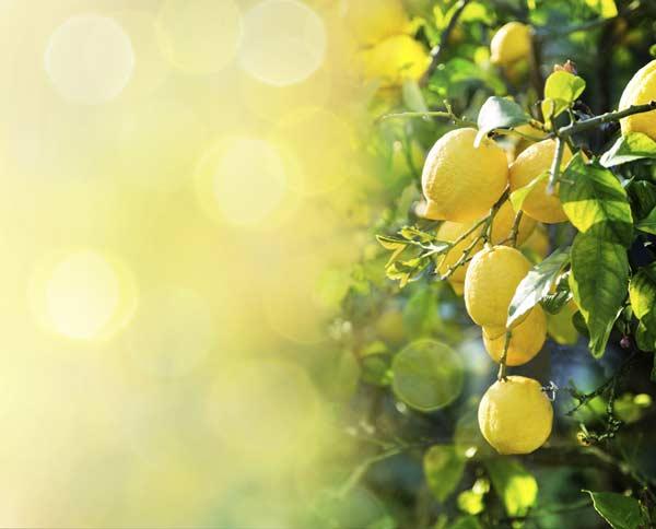 Costituenti del limone e proprietà terapeutiche