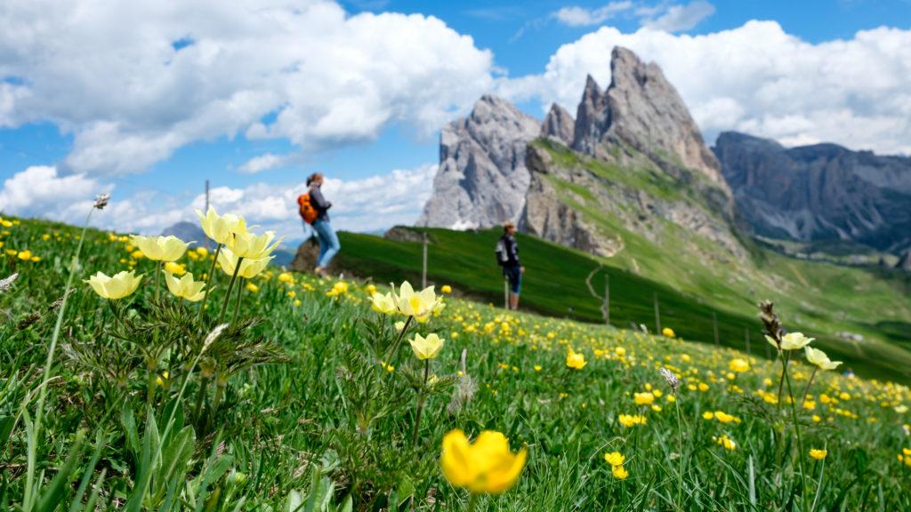 fiori gialli trekking